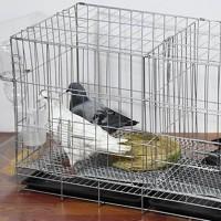 Kandang Burung Merpati Bahan Besi Ukuran Besar