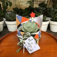 Hampers lebaran kaktus hias sukulen mini parcel idul fitri eid mubarak