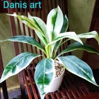 Pandan palsu/ tanaman pandan plastik/ tanaman hias/ Pandan