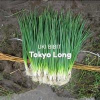 ( 10 Butir ) Benih Daun Bawang Tokyo Long
