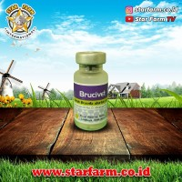 Brucivet Vaksin Brucella Abortus 10 Dosis Strain - Star Farm