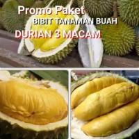 paket 3 bibit durian musaking Montong bawor
