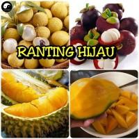 paket 4 bibit buah kelengkeng,mangga,manggis durian musang king super