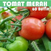 Bibit Benih Biji Tomat Merah Tomato Sayur benih unggul F1 seeds