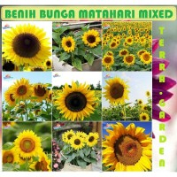 Bibit Benih Bunga Matahari Sunflower Mixed seeds