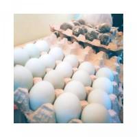 Telur Asin matang isi 6 butir Berkualitas Fresh segar Halal
