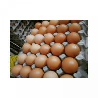 Telur ayam jumbo ukuran besar . telur fresh segar berkualitas
