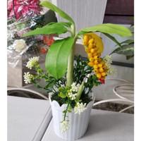 A4 Tanaman Hias plastik / Artificial Miniatur Pisang Mini Pot
