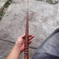 bahan bambu cendani simpanan untuk joran