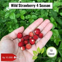 Benih wild strawberry 4 season