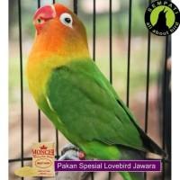 Promo Milet Putih Moncer Pakan Burung Lovebird Kenari Parkit 1 Kg
