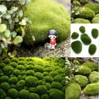 Batu Lumut Hijau 3 Ukuran untuk Dekorasi Taman