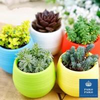 Pot Tanaman Hias mini untuk Kaktus, Succulent dan Tanaman mini lainya