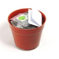 PROMO Souvenir Grow Kit Sayuran Benih Bibit Tanaman / Green Souvenir