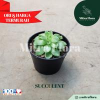 Succulent - Tipe 1