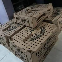 TERMURAH Bibit Joper | DOC Joper | Bibit Ayam | Ayam Kampung Super |