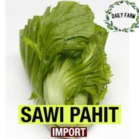 Benih Bibit Sawi Pahit Import