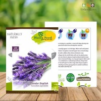 25 Seeds - Lavender English Haira Seed Biji Benih Bibit - OP0029