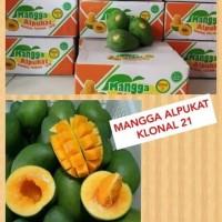 Mangga alpukat super/ Buah Mangga