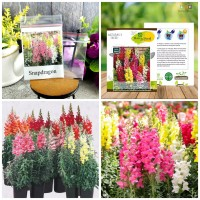40 Seeds - Snapdragon Tetra Mix Haira Seed Biji Benih Bibit - SR0026
