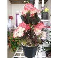 Bunga Hias (aster/bunga kertas) | Bunga Plastik | Tanaman Artificial