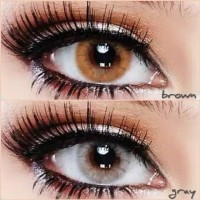 Softlens Sweety Solotica Hydrocor Gray Grey Brown Soft Lens Soflens S
