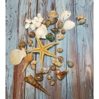 Kerang Laut Set Properti Foto Photography Hiasan Rumah Sea Shells