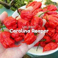( 9 Butir ) Benih Cabe Carolina Reaper / Cabe Terpedas