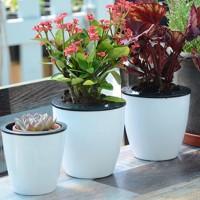 Pot Bunga / Tanaman dengan Model Otomatis dan Bergaya Fashionable