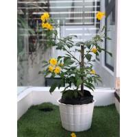 Pot Bunga Plastik 30 cm motif kayu putih
