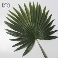 Daun Palem Besar / Daun Palsu / Artificial Leaf / Properti Foto