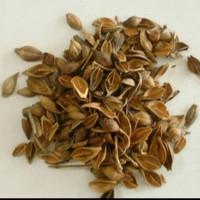 37 gram lian qiao forsuthia suspensa