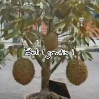 bibit durian montong berbuah dalam pot(tambulampot)