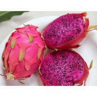 Buah Naga/ Dragon Fruit 1Kg