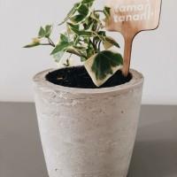 ☘️ tanaman succulent hedera helix + handmade pot