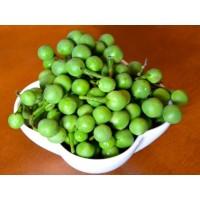 Buah Takokak / Tekokak /Solanum Torvum Per 1Kg