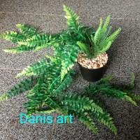 juntai pakis/ tanaman juntai/ tanaman hias/ tanaman rambat