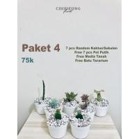 Paket 7pcs Sukulen Kaktus Mini Pot Putih 75000