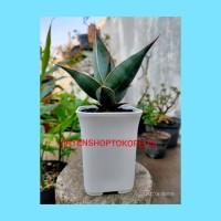 pot kotak putih/pot skulen/pot kaktus/pot murah