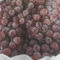 Buah anggur merah ada biji ( 1 krat )