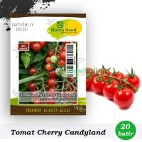 Benih-Bibit Tomat Red Cherry Candyland (Haira Seed)