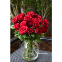Sexy Red Roses, Bunga Mawar Merah Potong Segar Semi Holland
