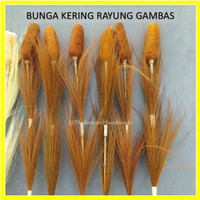 Bunga Kering Rayung Gambas / Dreid Flower Pampas Gambas