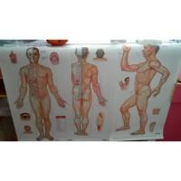 Gambar / Poster Titik Akupuntur Pria