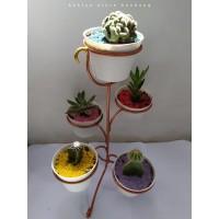 Rak Besi untuk Tanaman Kaktus Dan Sukulen isi 5 pot diameter 10cm