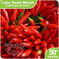 Benih Cabe / Cabai Rawit - Chili Seed
