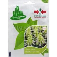 Benih Bunga Salvia REDDY WHITE - Panah Merah / East West Seed