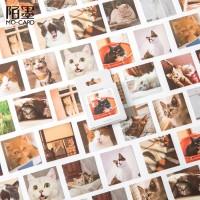 My Cat Photography Flake Stickers Set / Sticker Unik / Sticker Lucu