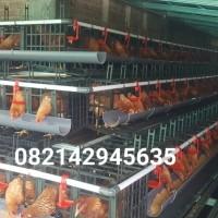 kandang ayam petelur (plastik)