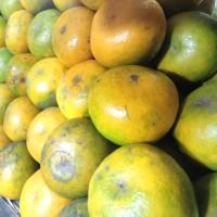 buah jeruk medan
